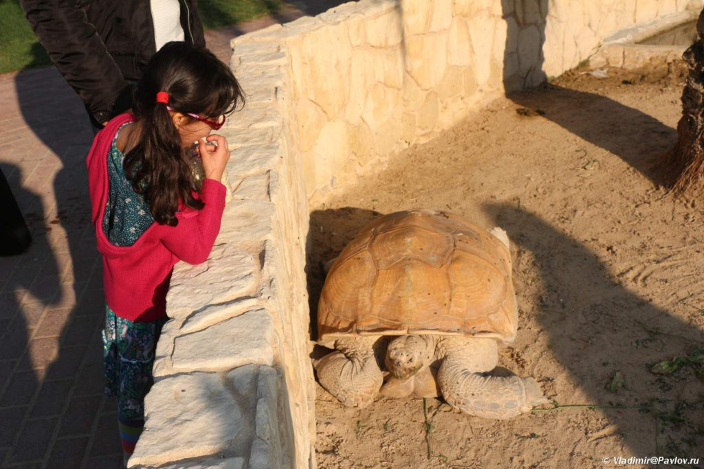 Bahrejn. Bolshaya cherepaha. Zoopark Al Arin. Al Areen Wildlife Park. Bahrain 1024x683 - Парк дикой природы Аль-Арин (Al Areen Wildlife Park) 2. Бахрейнский Зоопарк