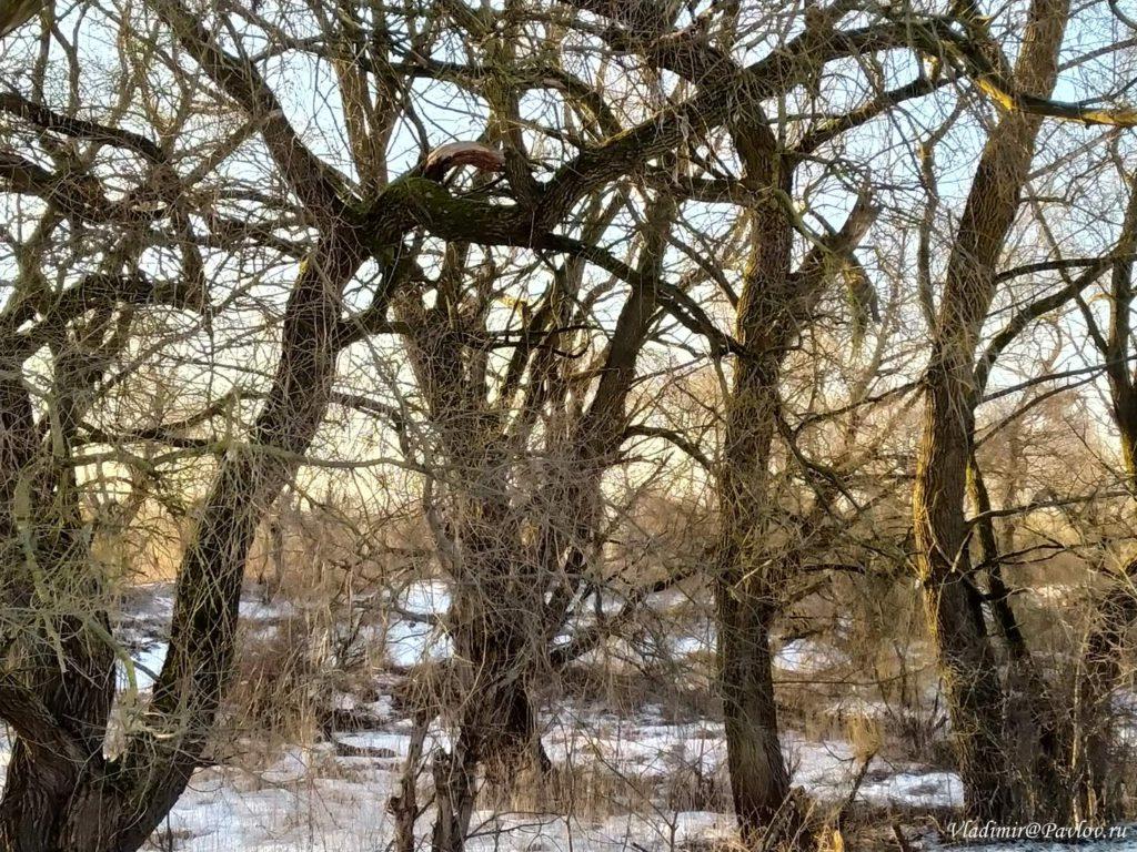 Bujnyj les v Velikom Novgorode 1024x768 - Тур в Великий Новгород на туристическом поезде из Москвы