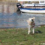 CHistejshaya voda ozera Ohrid sdelaet Vashu sherst gladkoj i blestyashhej 150x150 - Жилье в Охриде. Охридское озеро, пляжи.