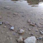 CHyornoe ozero Crno jezero v natsionalnom parke Durmitor 150x150 - Национальный парк Дурмитор (Durmitor). Черногория