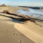Derevo na plyazhe v Rimini vybroshennoe shtormom 150x150 - Везде Италия. Расширяем пляжный отдых в Римини самостоятельными экскурсиями