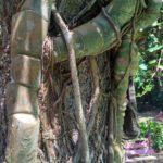 Derevo obvitoe lianami. Priroda Laosa. Laos. Luang Prabangh 150x150 - Окрестности Луанг Прабанг. Пещера Пхалуеси (Phaluesi Cave). Водопад Пху Си (Phu Si Waterfall)