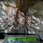 Derevo okolo Starogo Mosta v Mostare. Bosniya i Gertsegovina 150x150 - Мостар (Mostar) - достопримечательность Боснии