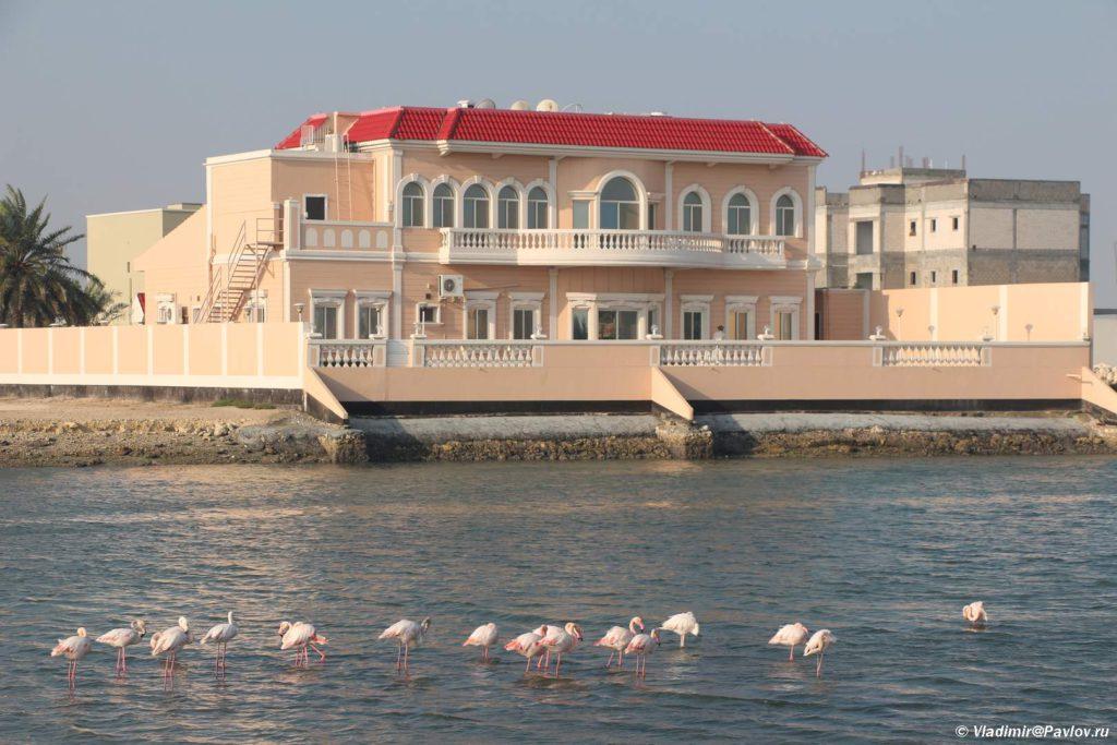 Dikie rozovye flamingo u kogo to pod oknami. Bahrejn 1024x683 - Экскурсии в Бахрейне. Самостоятельное путешествие по Бахрейну.