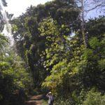 Doroga k vodopadu Phu Si. Peshhera Phaluesi. Phaluesi cave. Laos. Laos. Luang Phabang 150x150 - Окрестности Луанг Прабанг. Пещера Пхалуеси (Phaluesi Cave). Водопад Пху Си (Phu Si Waterfall)