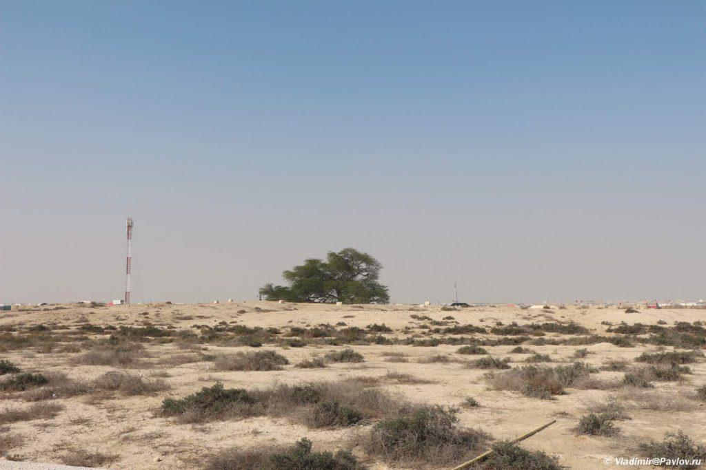 Dostoprimechatelnost Bahrejna. Derevo ZHizni. Tree Of Life. Bahrain 1024x683 - Древо Жизни в пустыне Бахрейна. Tree Of Life