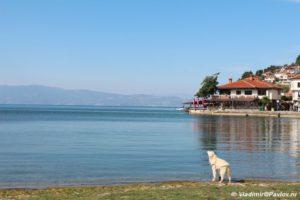 Etoj sobake ozero Ohrid tozhe ochen ponravilos 300x200 - Этой собаке озеро Охрид тоже очень понравилось
