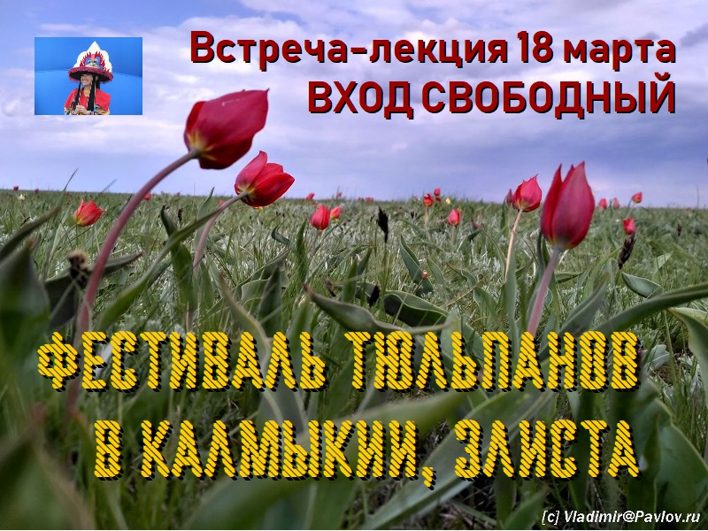 Festival Tyulpanov v Kalmykii. Elista. Lektsiya Vladimira Pavlova - 18 марта. Встреча-лекция. Фестиваль тюльпанов в Калмыкии. В гости к Будде