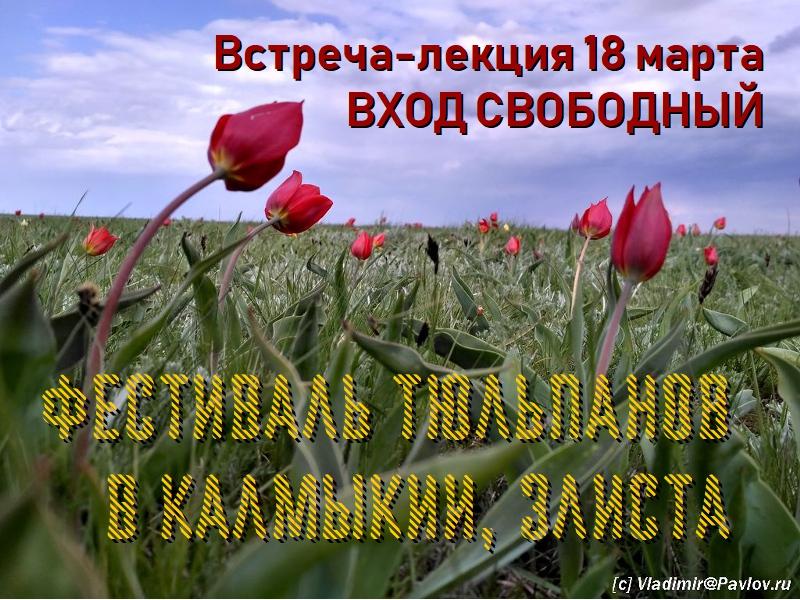 Festival Tyulpanov v Kalmykii. Elista - 18 марта. Встреча-лекция. Фестиваль тюльпанов в Калмыкии. В гости к Будде
