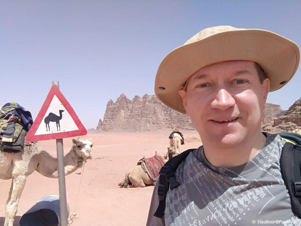 Iordanskie verblyudy moi lyubimye obitateli pustyni Vadi Ram 1024x768 - По Иордании. Самостоятельно в пустыню Вади Рам (Wadi Rum).