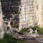 Mestnym kotam vhod v Izborskuyu krepost otkryt vsegda 150x150 - Изборская крепость
