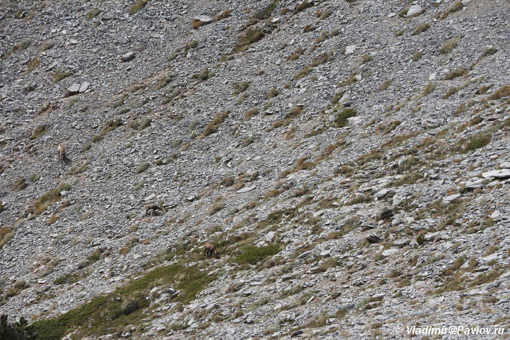 Najdi na etom foto kak minimum tri gornyh kozla 1024x682 - Туры на Олимп. Перевал Скала.