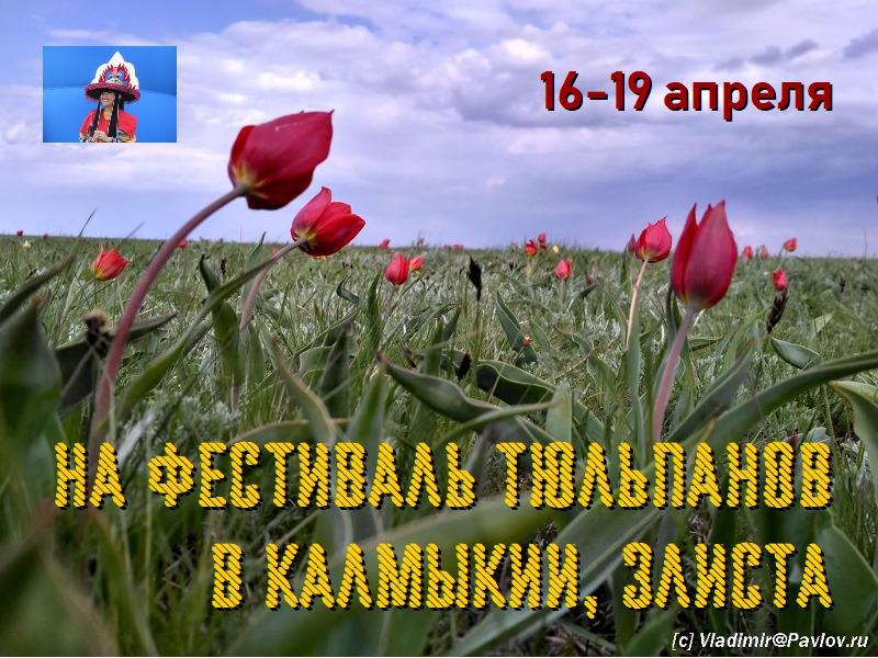 Ne tur na Festival tyulpanov v Kalmykii. Vladimir Pavlov - Не тур на Фестиваль тюльпанов в Калмыкии. Элиста