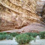 Nebolshie kusty. Eto nemnogoe na chto v pustyne hvataet vody. Iordaniya. Wadi Rum Jordan 150x150 - Каньоны в пустыне Вади Рам (Wadi Rum). Иордания.
