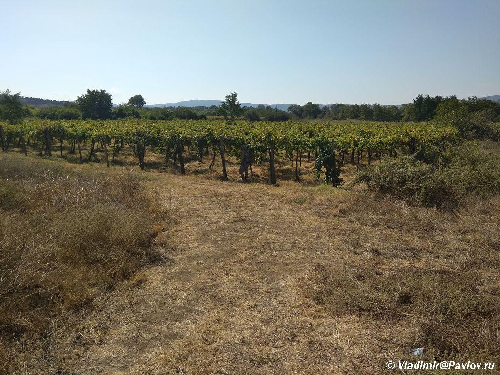 Plantatsii vinograda v Makedonii 1024x768 - Гевгелия. Гостилница Путин. Ланчи в Казино, щедрые дары Македонии