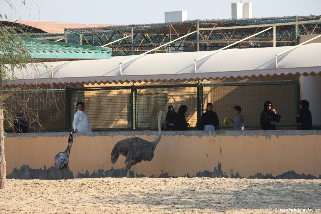 Posetiteli kormyat strausov v prirodnom parke Al Arin. Bahrejn. Al Areen Wildlife Park. Bahrain.JPG 1024x683 - Парк дикой природы Аль-Арин (Al Areen Wildlife Park) 2. Бахрейнский Зоопарк