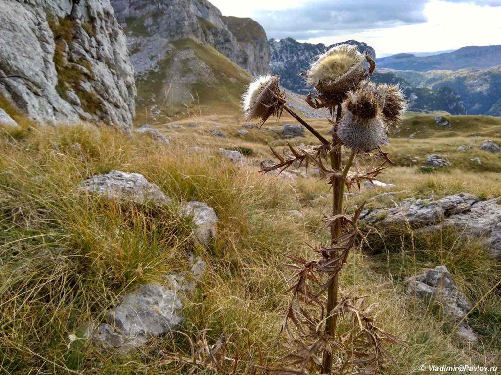 Priroda natsionalnogo parka Durmitor 2 1024x768 - Красивая дорога P14 через национальный парк Дурмитор. Черногория