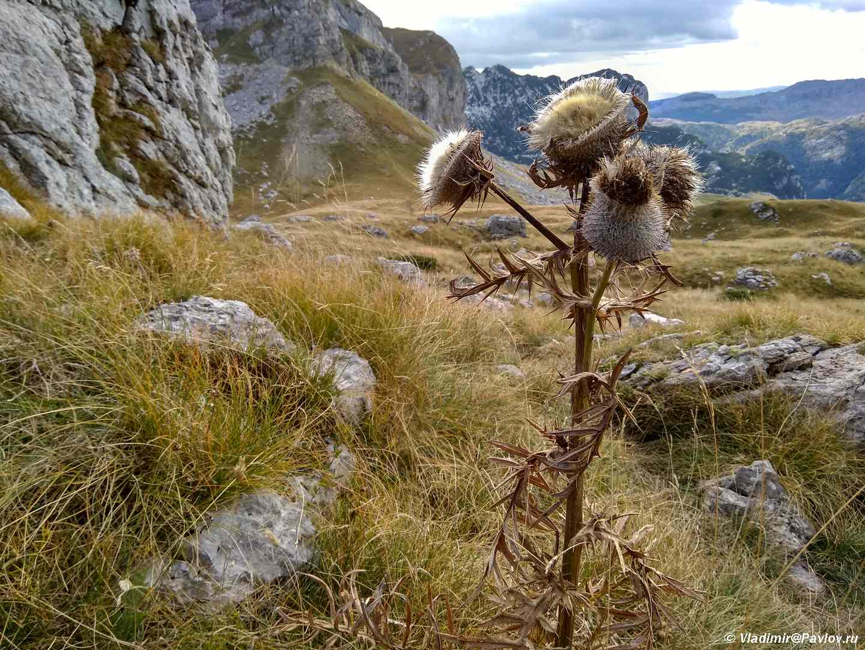 Priroda natsionalnogo parka Durmitor 2 - Красивая дорога P14 через национальный парк Дурмитор. Черногория