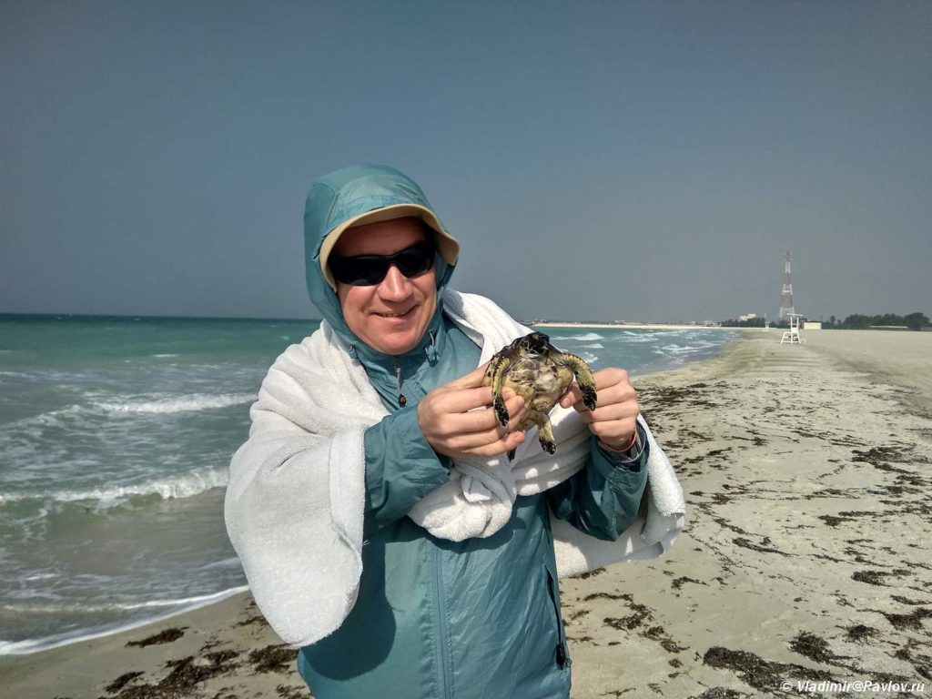 Pryachas ot vetra fotografiruyus s cherepahoj. Plyazhi Bahrejna. Bahrain beach 1024x768 - Пляжи Бахрейна. Где купаться в Бахрейне