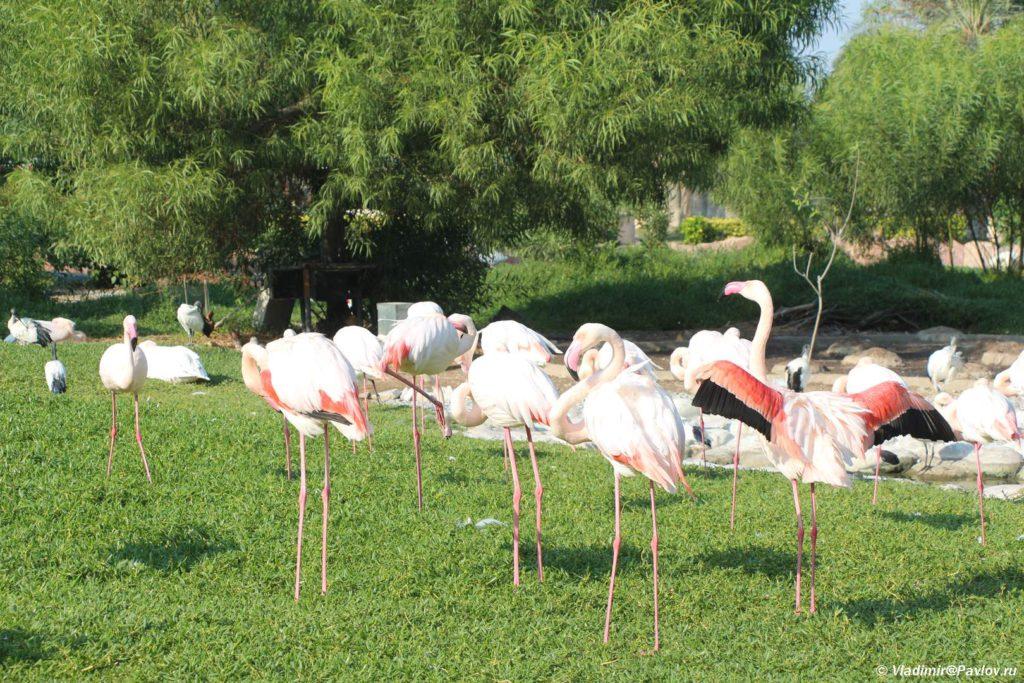 Rozovye flamingo v parke Al Arin. Al Areen Wildlife Park. Bahrain 1024x683 - Природный парк Аль-Арин. Al Areen Wildlife Park. Бахрейнский Зоопарк