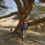 S plodom Dereva ZHizni v pustyne Bahrejna. Tree Of Life. Bahrain 150x150 - Древо Жизни в пустыне Бахрейна. Tree Of Life