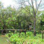 Staryj most na puti peshehodnogo marshruta k vodopadu Phu Si Phu Si waterfall. Laos. Dostoprimechatelnosti Luang Prabang. Laos Luang Prabang 150x150 - Окрестности Луанг Прабанг. Пещера Пхалуеси (Phaluesi Cave). Водопад Пху Си (Phu Si Waterfall)