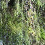 Strui Slovenskih vodopadov 150x150 - Словенские ключи и Городищенское озеро в Изборске