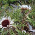 TSvety endemiki v natsionalnom parke Olimp 150x150 - Утро на Олимпе. Спуск на Землю.