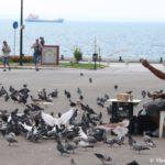 Ukrotitel golubej. Naberezhnaya v Saloniki. Ploshhad Aristotelya 150x150 - Мечты сбываются