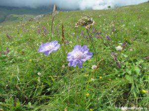 V avguste v gorah vse eshhe tsvetet. Alaniya Severnaya Osetiya 300x225 - Подготовка к восхождению на Казбек. 2