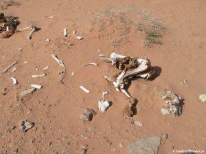 Zabludivshis v pustyne Vadi Ram Vy riskuete ne vernutsya. Iordaniya. Wadi Rum desert Jordan 300x225 - Где и как ночевали в пустыне Вади Рам (Wadi Rum) в палатке. Иордания.