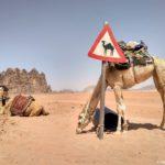 Znak Ostorozhno Verblyud 150x150 - Акаба (Al Aqabah). Иорданский курорт на Красном море.